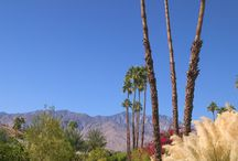 Beauty of Palm Springs! / The beautiful landscapes of sunny Palm Springs!  / by Hyatt Palm Springs