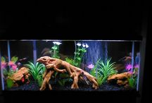 Aquarium Fish Facts / Interesting and helpful stuff about fresh water aquariums and fish.