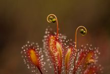 Úžasná Příroda