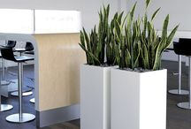 INTERIOR - Planters / Permanent larger format planter ideas