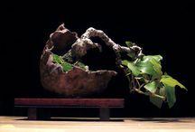 Bonsai / by Kate Sawyer