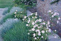 Garden grasses
