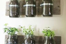 Plants / by Jackie Stender