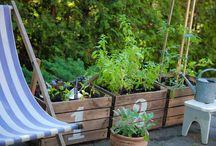 ogród i podobne