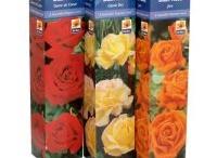 Roses, Fruit Trees, Shrubs