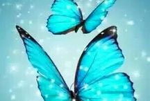 Butterflies/Skoenlappers