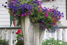 "Outdoor-Tree Stump Planter / Useful Ideas for the Fallen trees after a Wind storm. By using a ""Hallowed out Log"" or a left in a garden ""Tree Stump"". / by Linda Finni"
