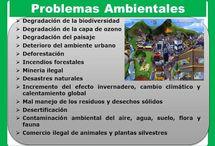 Tipos de problemas ambientales / principales tipos de problemas ambientales