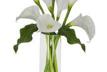 Arranjos Florais / Flowers