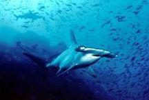 Shark and waill