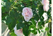 Vesnická zahrada pro potěchu oka / Pro potěchu oka