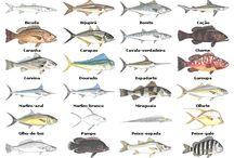 pescarias