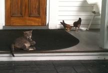 Banyan Cats on Duty