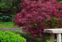 My japanese style garden