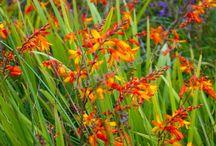 Plante katalog