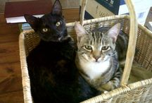 My Cats / Theklaje, Hedwig and Mr Huff - cats extraordinaire.