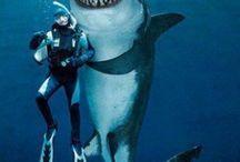 lol shark