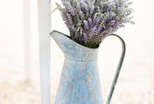 Vintage and Flowers / by Svetlana Timoshenko