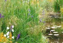 Pond edge ideas
