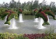 gardens / by Daphnie Creighton