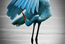 fugler humming