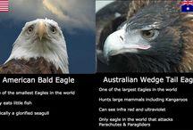 Aussie Funny