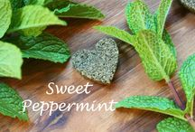 Sweet Peppermint / A board dedicated to the invigorating feeling Peppermint gives us!