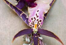 Blooms / by Amber Luke