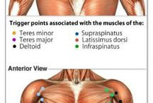 Human muscle pain points / Muscle pain