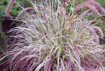 Ornamental Grasses / Give your landscaping four seasons of interest with low-maintenance ornamental grass plants.