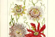 floral & herbal