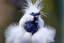 планета птиц