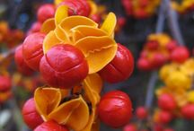 Garden flora Nursery / Nursery plants