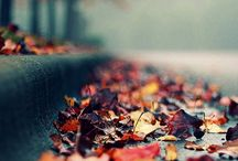 """Delight in Autumn / """"Autumn is a second spring when every leaf is a flower.""""  Dedicated to my favorite season."""