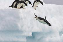 Arctic Animals / Our favorite arctic animals in their natural habitats!