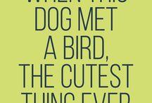 cute animal / cute animal