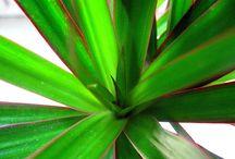 House /Indoor Plants