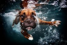 Dogs under the water / My Sister Grace would love these pics :)