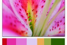 Tavolozza di colori di LANA