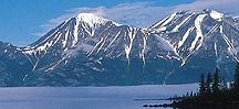 Wild Alaska Salmon! / King, coho, sockeye, chum or pink...I love 'em all! You may also be interested in my Salmon Trollers board