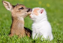 Animal Deer Love With Cat Amazing Photo Download   Famous HD Wallpaper