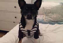 Dexter the dog / Jackawawa