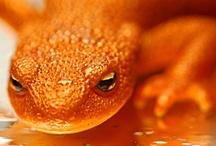 Animals: Reptiles