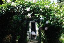 mijn eigen tuin