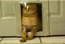Gatos / muchos gatos prr