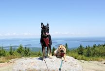 Maine Dog Friendly Spots / Great dog friendly locations in Maine