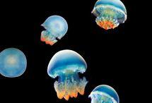 sea creatures / by Ashley Jean