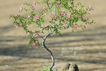 gyöngy fák