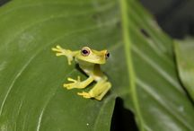 Frogs / by Katie Thompson