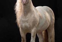 Horse :*